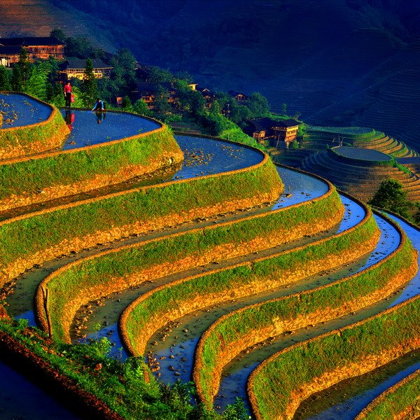 Terrace Farming, China